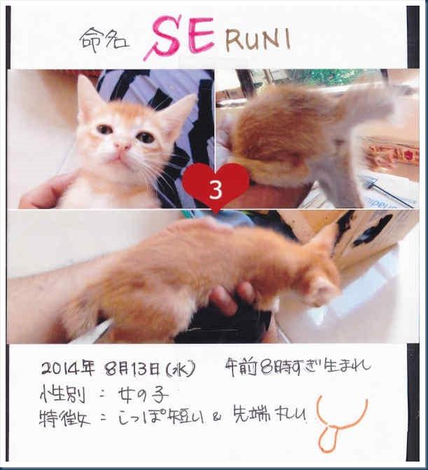 4-Seruni